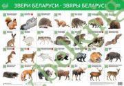 Звери Беларуси. Звяры Беларусi. Интерактивный плакат.