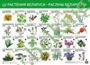 Растения Беларуси. Раслiны Беларусi. Интерактивный плакат.
