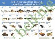Животные водоемов Беларуси. Интерактивный плакат.