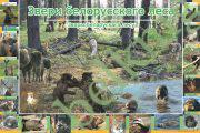 Звери белорусского леса. (формат А1)