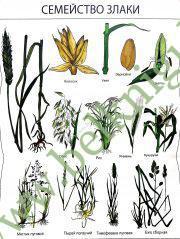 Плакаты по биологии (22 цветных плаката, формат листа – 70х90 см)